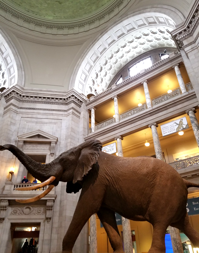 Museum Of Natural History In Chicago Free Days